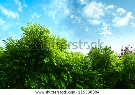 Leaves isolated on the blue sky background