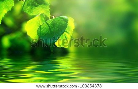 Leaves of birch and sunny day over water. Long format. - stock photo