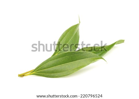 Leaves of cinnamon - stock photo