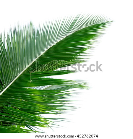 Leaves of coconut tree isolated on white background, This has clipping path included. - stock photo