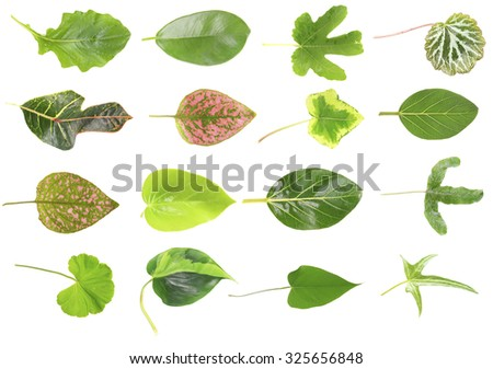 Leaves of green house plants, isolated on white - stock photo