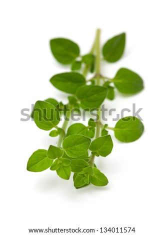 Leaves of marjoram herb on isolated background