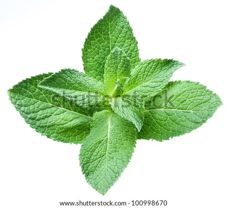Leaves of mint on a white background - stock photo