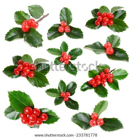 Leaves of mistletoe with berries collage, isolated on white - stock photo