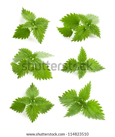 Leaves of nettle isolated - stock photo