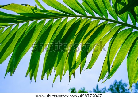 Leaves of palm tree isolated on sky background.