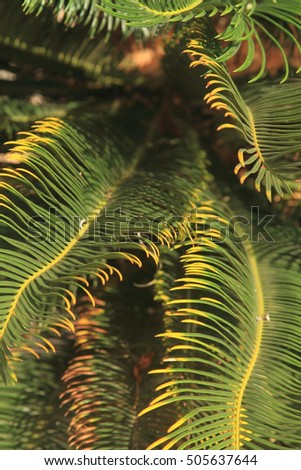 Leaves of palm tree, nature background