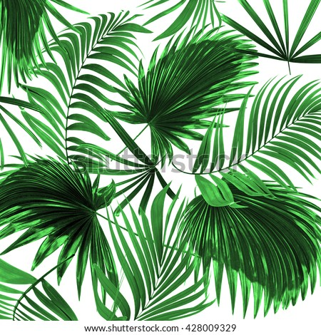 Leaves Palm Tree On White Background Stock Photo 428009329