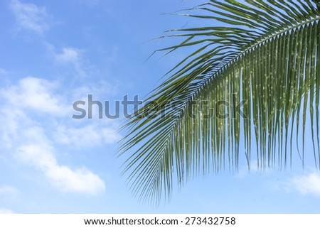 Leaves of palm tree with blue skies - stock photo