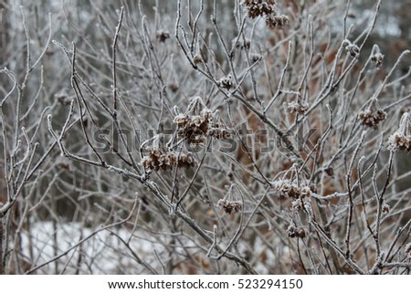 Leaves of plants, branches and berries covered with a thick layer of frost. Winter background. Nature background. Copy space.
