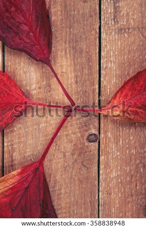 leaves of wild grapes on a wooden background
