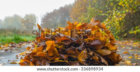 Leaves on a path through a forest in autumn