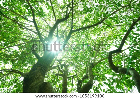 https://thumb1.shutterstock.com/display_pic_with_logo/167494286/1053199100/stock-photo-leaves-on-a-tree-in-the-park-with-the-sun-1053199100.jpg