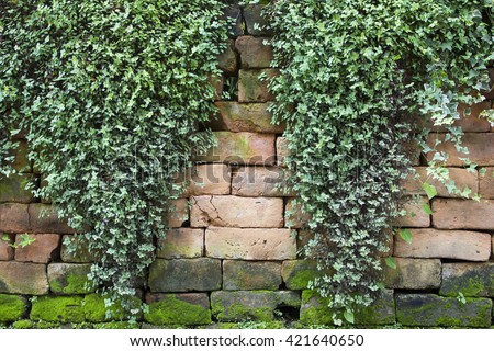 leaves on brick wall for wallpaper. - stock photo