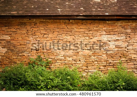 leaves on Old  brick wall for wallpaper