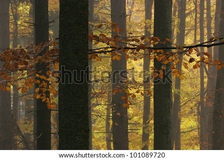 Leaves on the branches in autumn forest - stock photo