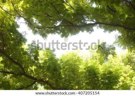 Leaves on the brench - stock photo