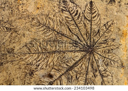 Leaves on the cement floor - stock photo