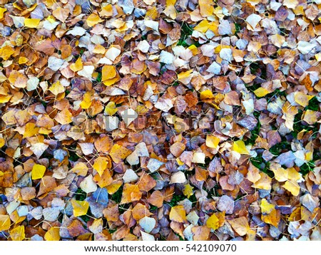 Leaves on the floor on autumn in a park in Spain