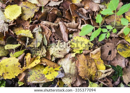 leaves on the ground in autumn