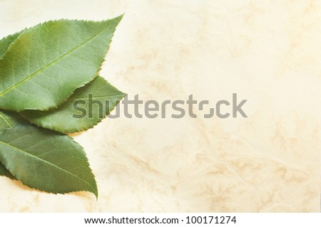 Leaves on the old paper background - stock photo