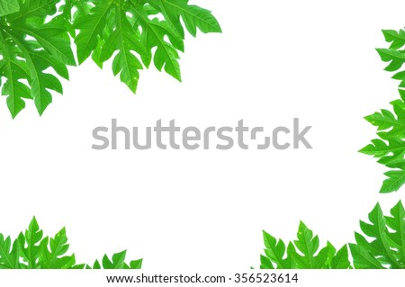 Leaves on white background.