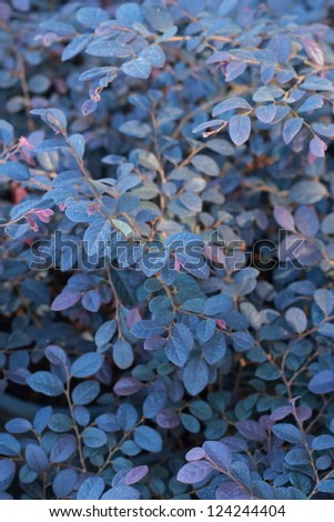 Leaves purple background. - stock photo