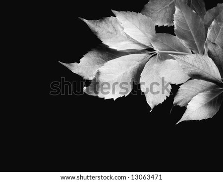 Leaves Silhouette - stock photo