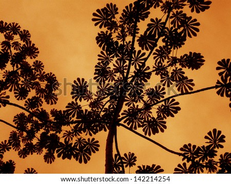 Leaves silhouette pattern