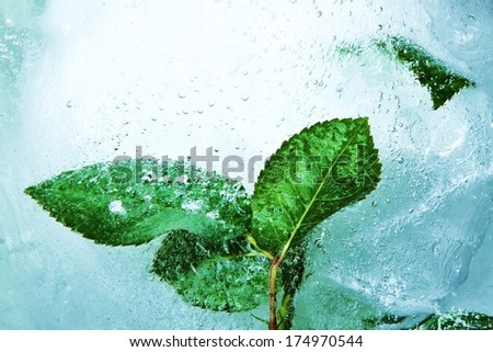 leaves trapped in a ice block