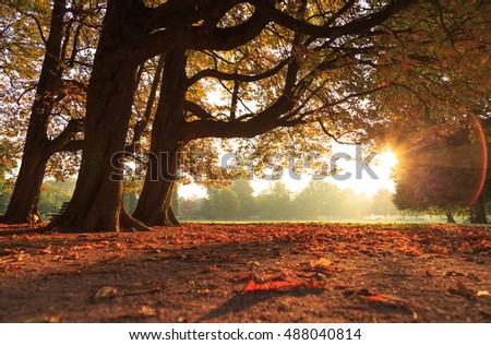 Leaves, trees and sun on a nice autumn morning in parc de la Tete d'Or in Lyon, France.