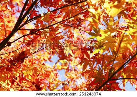 Leaves turning orange in Autumnal forest - stock photo