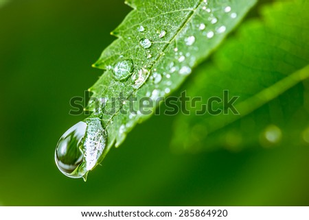 Leaves with drops of water. Can be used as background       - stock photo