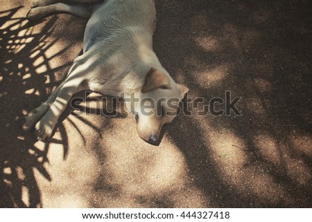 Leaves with shadow and dog