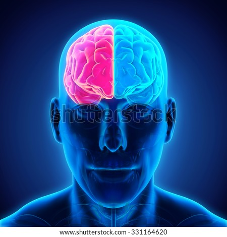Left and Right Human Brain - stock photo
