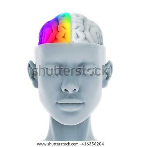 Left and Right Human Brain Anatomy Illustration. 3D rendering - stock photo