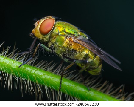 Left side view of green fly on hairy branch (macro). - stock photo