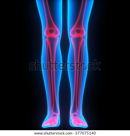Leg and Knee Joints - stock photo