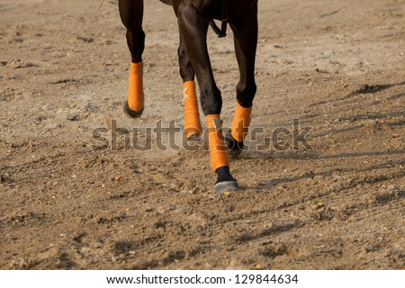 leg of running horse on sand field - stock photo