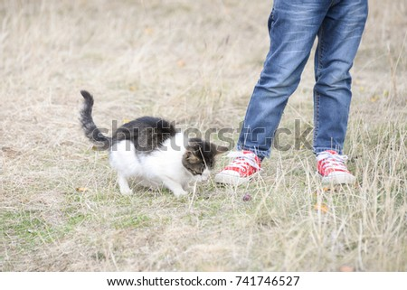 Legs of boy in red sneakers and cat