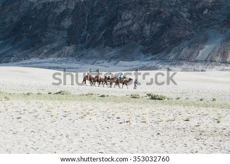 Leh,India - July 11, 2014 : Tourist ride carmels at Hunder village in Nubra Valley, Ladakh, Jammu and Kashmir, India.