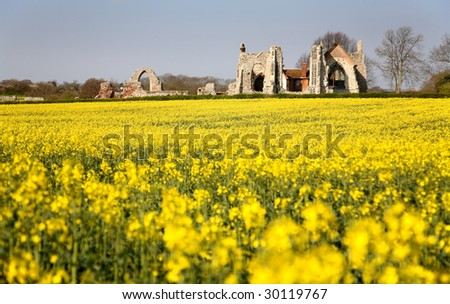 Leiston Abbey Suffolk with Rapeseed Field