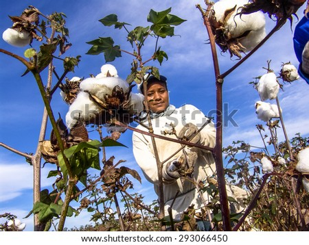 Leme, Sao Paulo, Brazil, May 10, 2005. A cotton picker worker during the harvest in Brazil. - stock photo