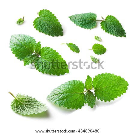 Lemon balm (Melissa officinalis) leaves collection close-up isolated on white  background  - stock photo