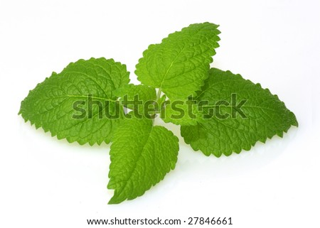 Lemon balm on bright background. - stock photo