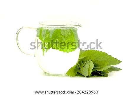 lemon balm tea on a white background - stock photo