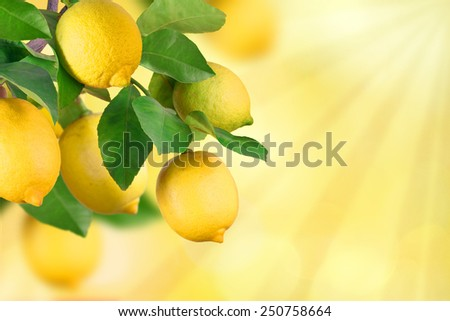 Lemon bunch with space for text - stock photo