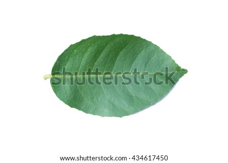 Lemon green leaves isolated on a white