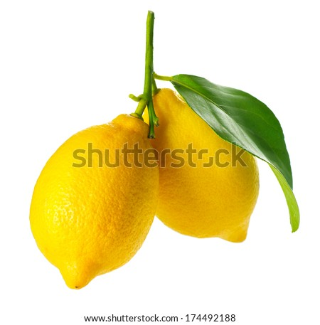 Lemon isolated on a White background. Fresh and Ripe Lemons hanging on a branch with Leaf - stock photo