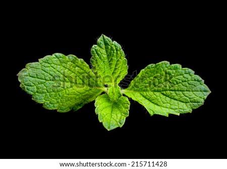 Lemon melissa leaf closeup isolated om - stock photo